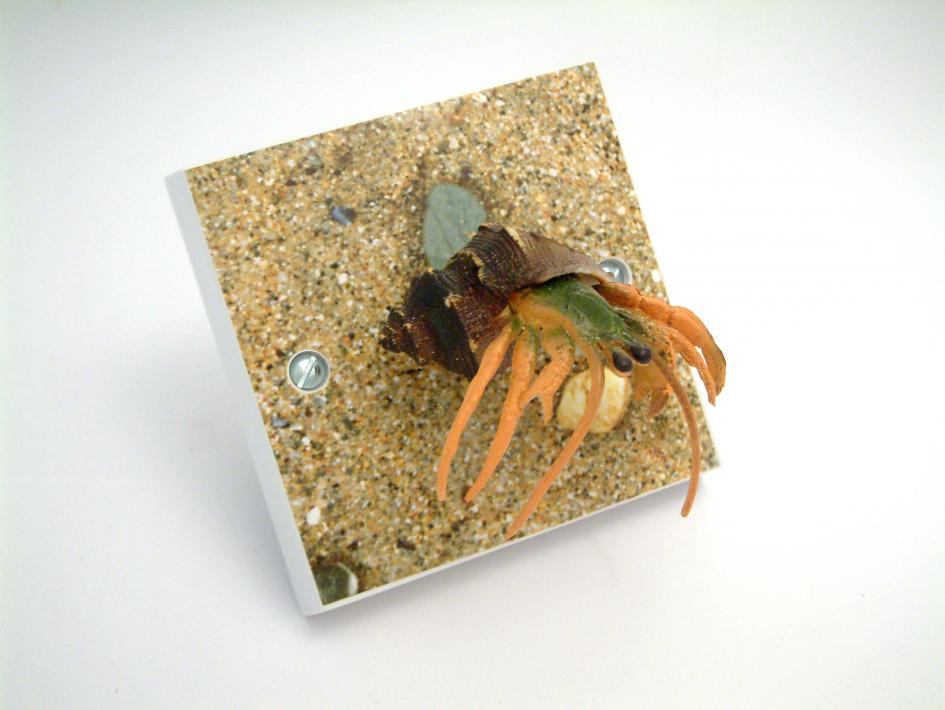 Hermit Crab Light Switch - Animal Light Switches