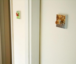 Red Frog and Lop Eared Bunny Light Switches